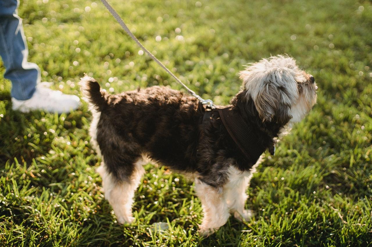 Gipote hjælper dig med at finde præcist den hund du leder efter